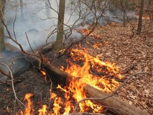 forestfire-morguefile